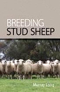 Breeding-Stud-Sheep