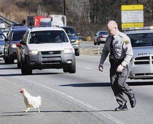 chicken cross road