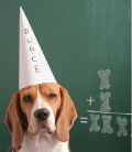 dog in dunce cap - thumb