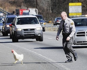 Chicken-crossing-the-road-in-Lexington-NC