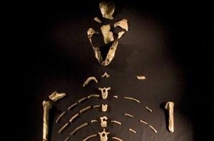 lucy-bones